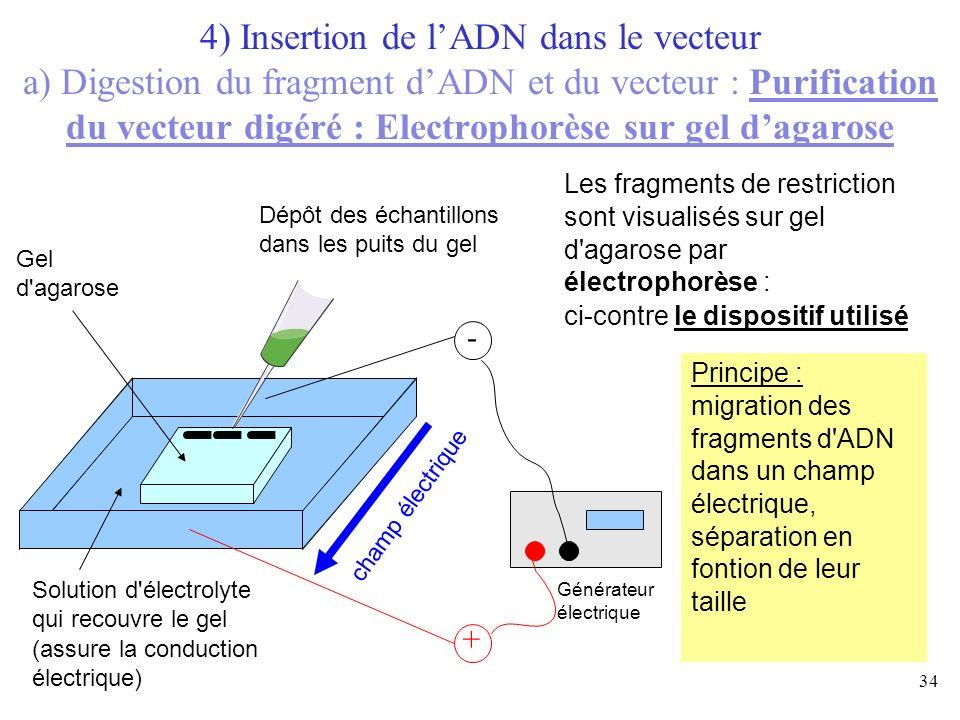34 Solution d'électrolyte qui recouvre le gel (assure la conduction électrique) Gel d'agarose Les fragments de restriction sont visualisés sur gel d'a