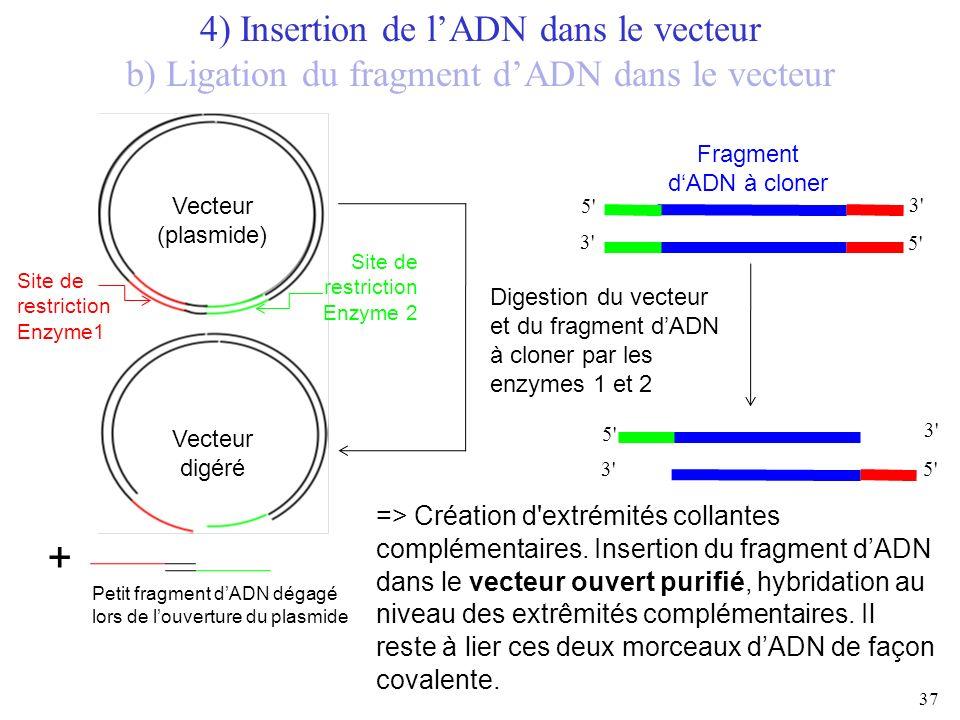37 5' 3' 5' 3' Fragment dADN à cloner 5' 3' 5' 3' => Création d'extrémités collantes complémentaires. Insertion du fragment dADN dans le vecteur ouver