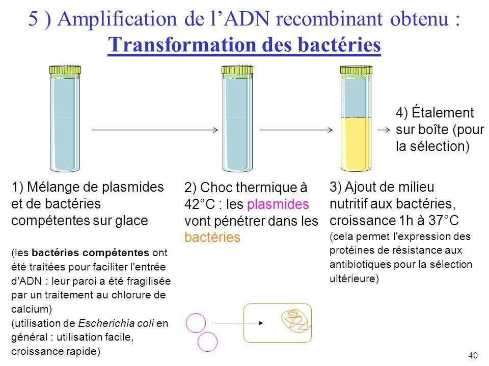 40 5 ) Amplification de lADN recombinant obtenu : Transformation des bactéries 1) Mélange de plasmides et de bactéries compétentes sur glace (les bact