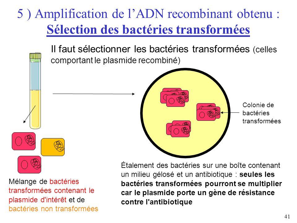 41 Mélange de bactéries transformées contenant le plasmide d'intérêt et de bactéries non transformées Étalement des bactéries sur une boîte contenant