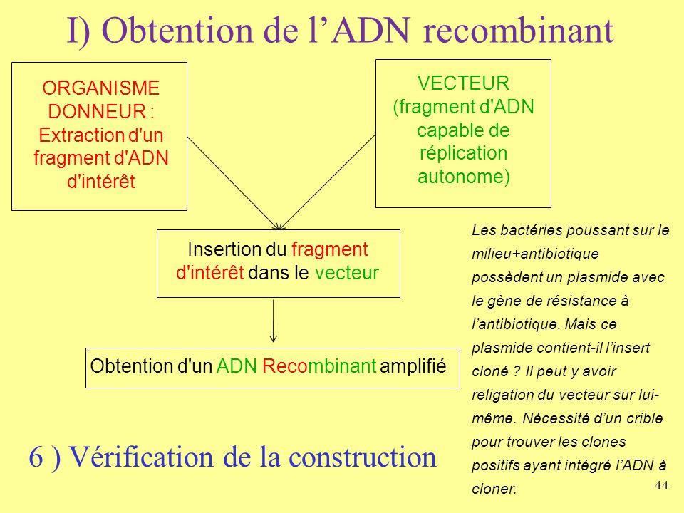44 I) Obtention de lADN recombinant ORGANISME DONNEUR : Extraction d'un fragment d'ADN d'intérêt VECTEUR (fragment d'ADN capable de réplication autono