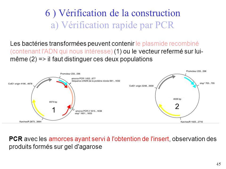 45 6 ) Vérification de la construction a) Vérification rapide par PCR Les bactéries transformées peuvent contenir le plasmide recombiné (contenant l'A