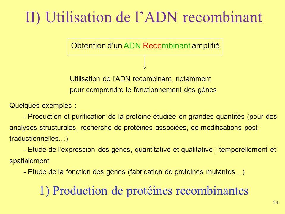 54 II) Utilisation de lADN recombinant Obtention d'un ADN Recombinant amplifié Utilisation de lADN recombinant, notamment pour comprendre le fonctionn