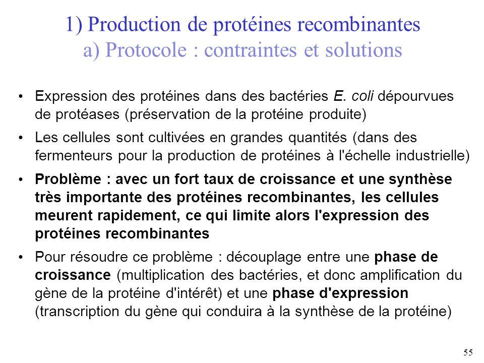 1) Production de protéines recombinantes a) Protocole : contraintes et solutions 55 Expression des protéines dans des bactéries E. coli dépourvues de