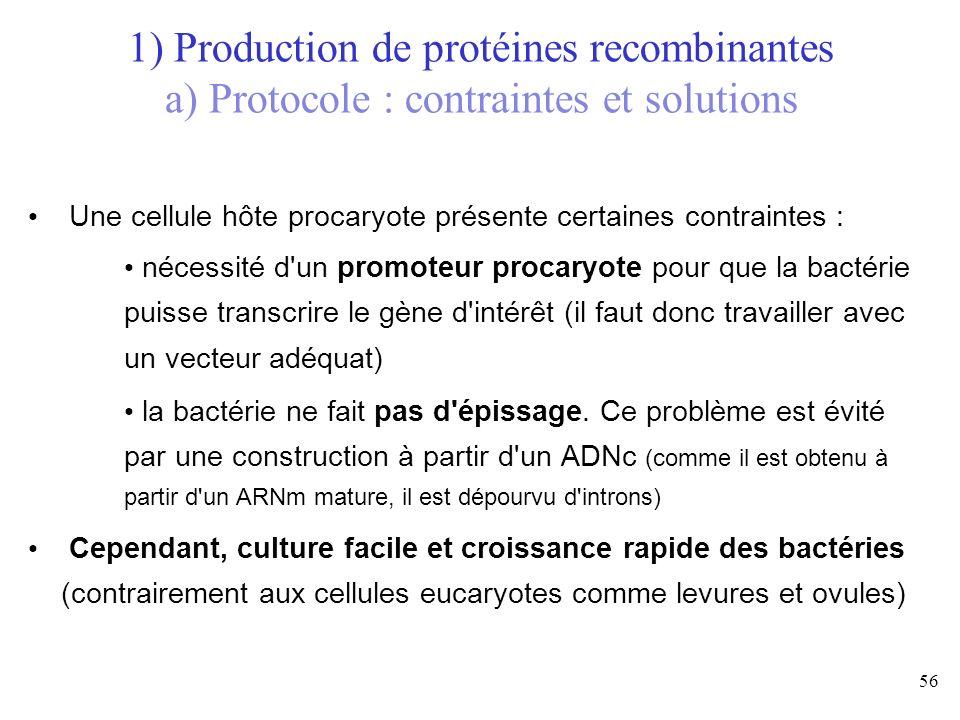 56 Une cellule hôte procaryote présente certaines contraintes : nécessité d'un promoteur procaryote pour que la bactérie puisse transcrire le gène d'i
