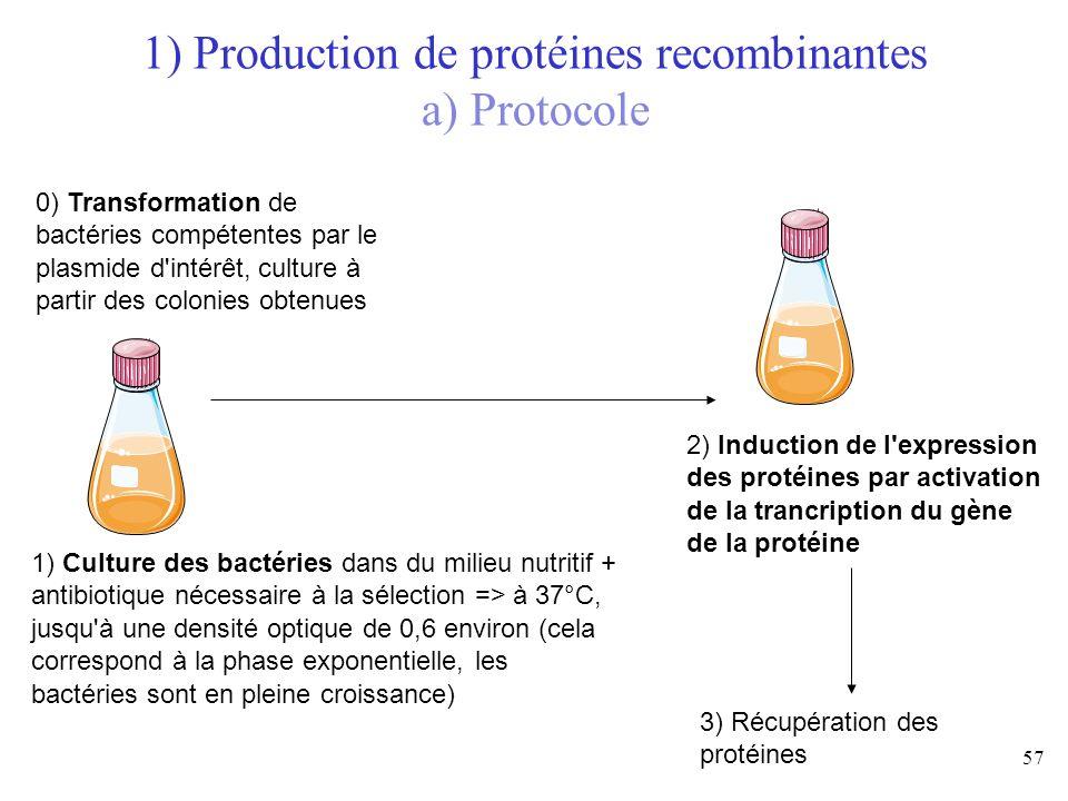 57 1) Culture des bactéries dans du milieu nutritif + antibiotique nécessaire à la sélection => à 37°C, jusqu'à une densité optique de 0,6 environ (ce