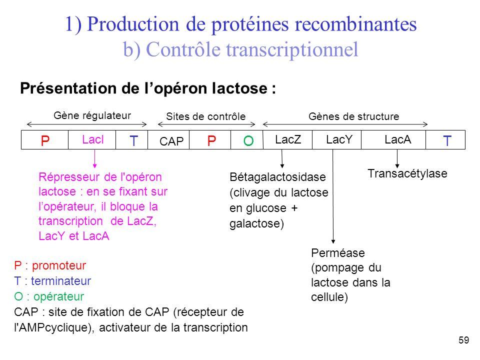 59 Présentation de lopéron lactose : P LacI T CAP P O LacZ T LacYLacA P : promoteur T : terminateur O : opérateur CAP : site de fixation de CAP (récep