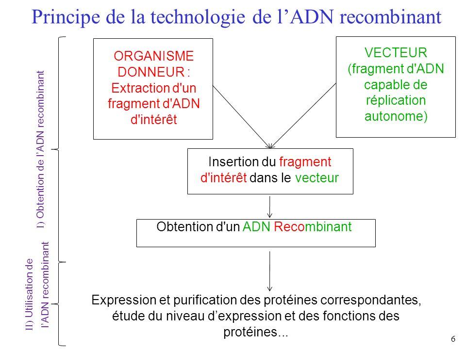6 Principe de la technologie de lADN recombinant ORGANISME DONNEUR : Extraction d'un fragment d'ADN d'intérêt VECTEUR (fragment d'ADN capable de répli