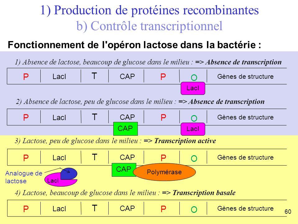 4) Lactose, beaucoup de glucose dans le milieu : => Transcription basale P LacI T CAP P O Gènes de structure 3) Lactose, peu de glucose dans le milieu