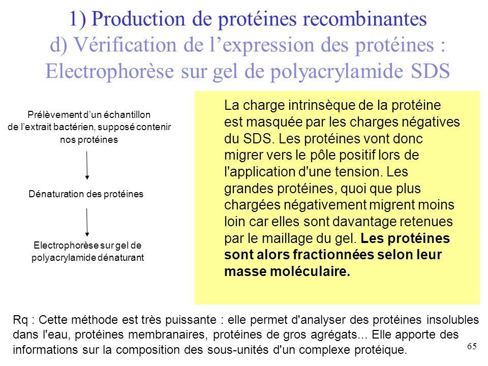 La charge intrinsèque de la protéine est masquée par les charges négatives du SDS. Les protéines vont donc migrer vers le pôle positif lors de l'appli