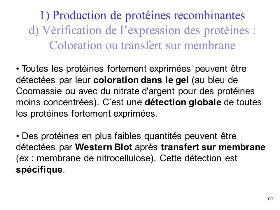 Toutes les protéines fortement exprimées peuvent être détectées par leur coloration dans le gel (au bleu de Coomassie ou avec du nitrate d'argent pour