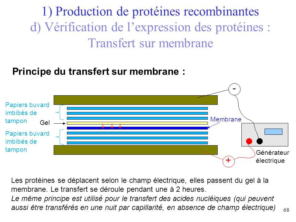 Les protéines se déplacent selon le champ électrique, elles passent du gel à la membrane. Le transfert se déroule pendant une à 2 heures. Le même prin