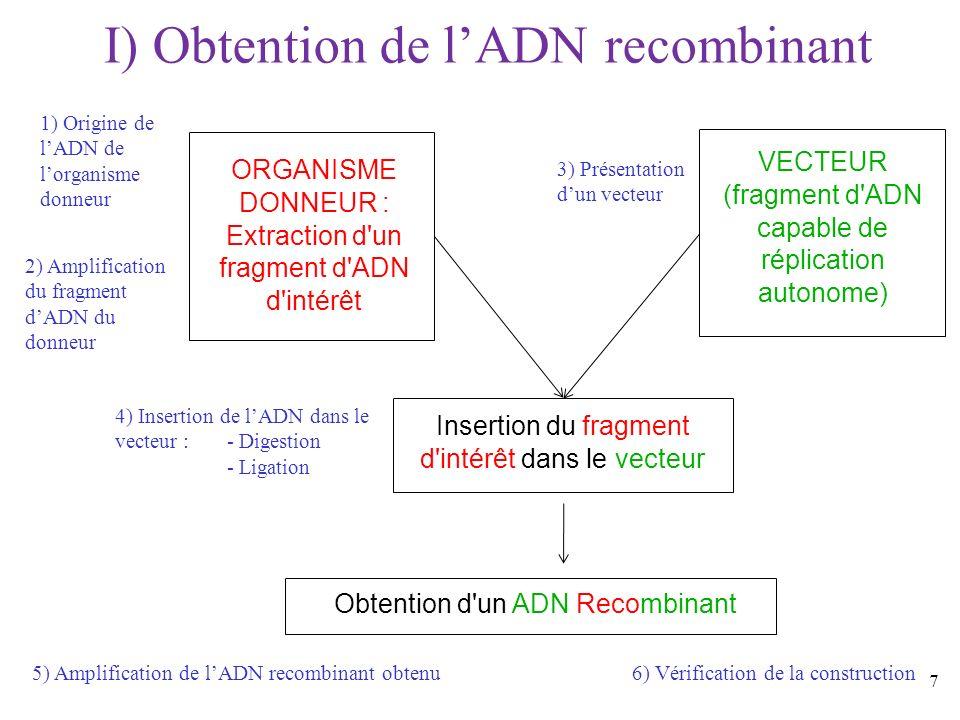 7 I) Obtention de lADN recombinant ORGANISME DONNEUR : Extraction d'un fragment d'ADN d'intérêt VECTEUR (fragment d'ADN capable de réplication autonom