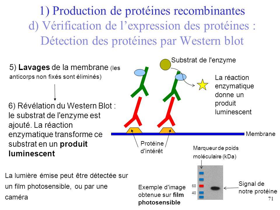 5) Lavages de la membrane (les anticorps non fixés sont éliminés) Membrane Protéine d'intérêt Exemple d'image obtenue sur film photosensible Signal de