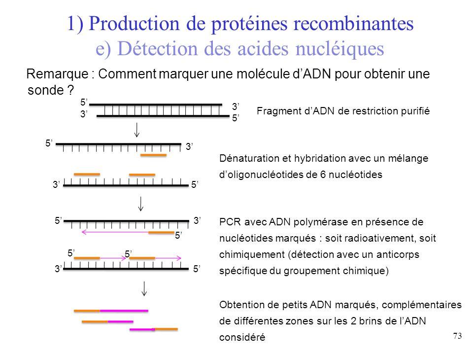 Remarque : Comment marquer une molécule dADN pour obtenir une sonde ? 73 1) Production de protéines recombinantes e) Détection des acides nucléiques F