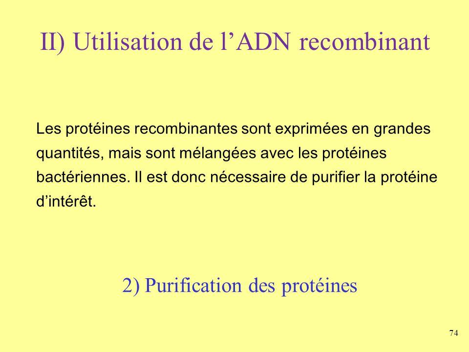 74 II) Utilisation de lADN recombinant Les protéines recombinantes sont exprimées en grandes quantités, mais sont mélangées avec les protéines bactéri