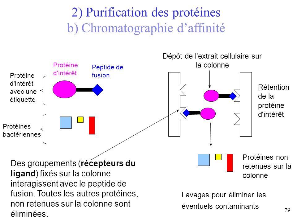 Protéine d'intérêt avec une étiquette Protéine d'intérêt Protéines bactériennes Peptide de fusion Des groupements (récepteurs du ligand) fixés sur la