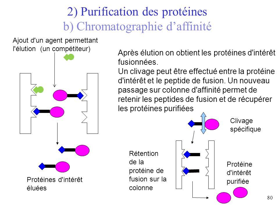 Ajout d'un agent permettant l'élution (un compétiteur) Protéines d'intérêt éluées Après élution on obtient les protéines d'intérêt fusionnées. Un cliv
