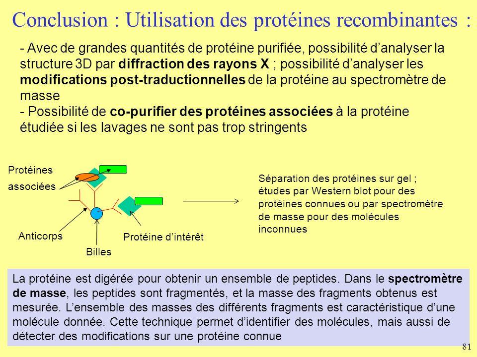 Conclusion : Utilisation des protéines recombinantes : - Avec de grandes quantités de protéine purifiée, possibilité danalyser la structure 3D par dif