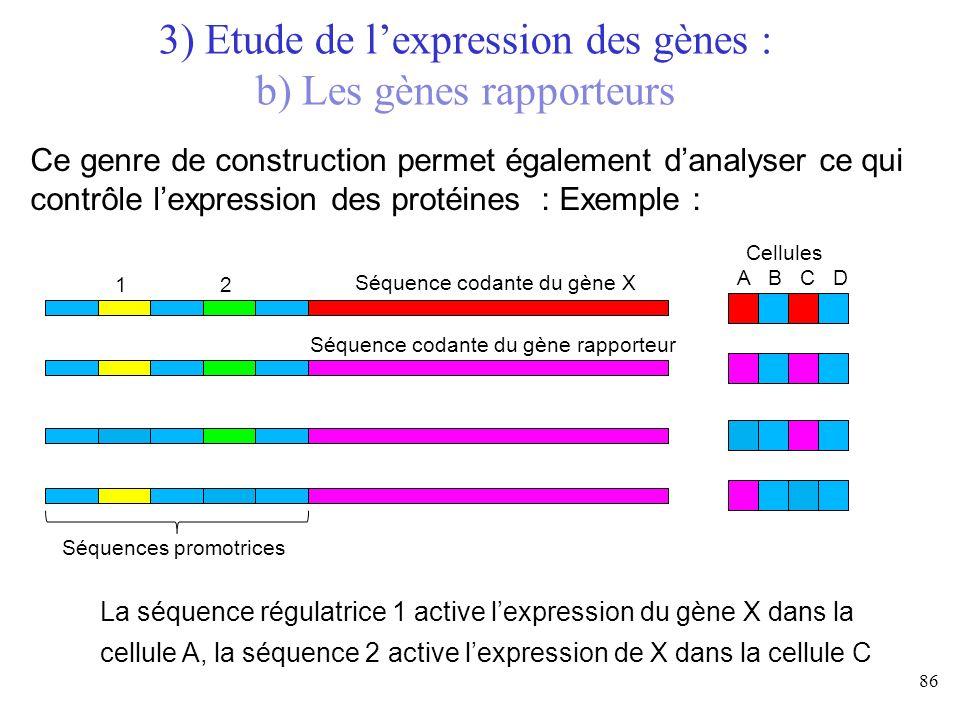 86 3) Etude de lexpression des gènes : b) Les gènes rapporteurs Ce genre de construction permet également danalyser ce qui contrôle lexpression des pr