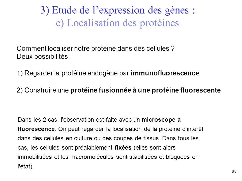 Comment localiser notre protéine dans des cellules ? Deux possibilités : 1) Regarder la protéine endogène par immunofluorescence 2) Construire une pro
