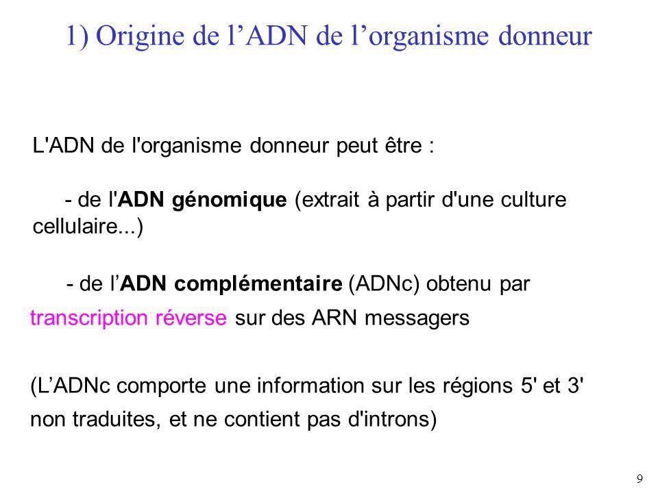 9 L'ADN de l'organisme donneur peut être : - de l'ADN génomique (extrait à partir d'une culture cellulaire...) - de lADN complémentaire (ADNc) obtenu