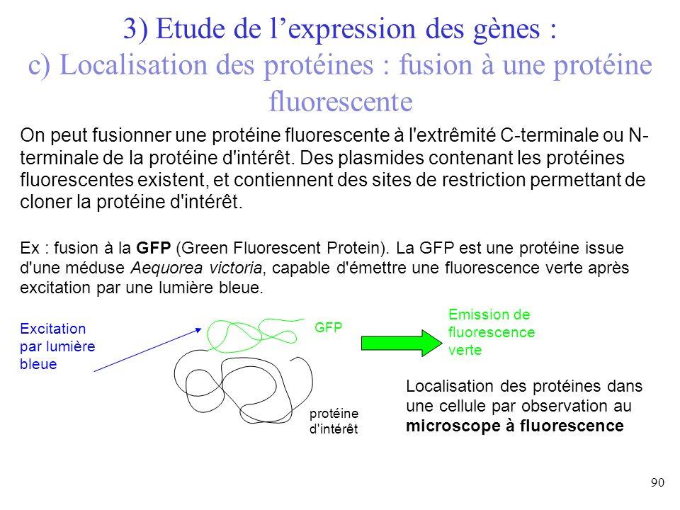 On peut fusionner une protéine fluorescente à l'extrêmité C-terminale ou N- terminale de la protéine d'intérêt. Des plasmides contenant les protéines