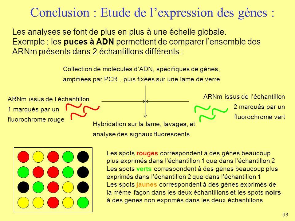 Conclusion : Etude de lexpression des gènes : 93 Les analyses se font de plus en plus à une échelle globale. Exemple : les puces à ADN permettent de c