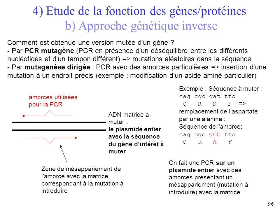 Comment est obtenue une version mutée dun gène ? - Par PCR mutagène (PCR en présence dun déséquilibre entre les différents nucléotides et dun tampon d