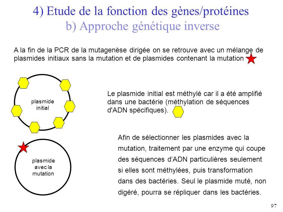 A la fin de la PCR de la mutagenèse dirigée on se retrouve avec un mélange de plasmides initiaux sans la mutation et de plasmides contenant la mutatio