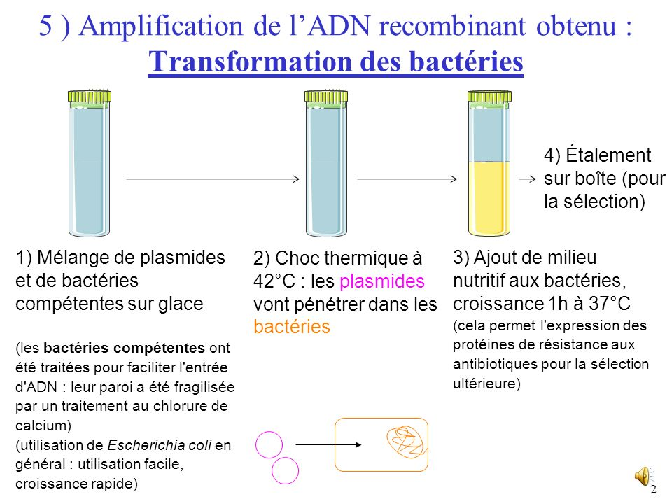 1 I) Obtention de lADN recombinant ORGANISME DONNEUR : Extraction d'un fragment d'ADN d'intérêt VECTEUR (fragment d'ADN capable de réplication autonom