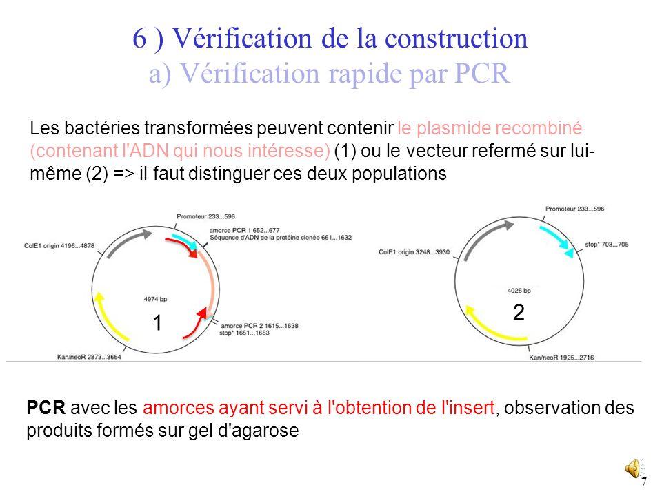 6 I) Obtention de lADN recombinant ORGANISME DONNEUR : Extraction d un fragment d ADN d intérêt VECTEUR (fragment d ADN capable de réplication autonome) Insertion du fragment d intérêt dans le vecteur Obtention d un ADN Recombinant amplifié 6 ) Vérification de la construction Les bactéries poussant sur le milieu+antibiotique possèdent un plasmide avec le gène de résistance à lantibiotique.