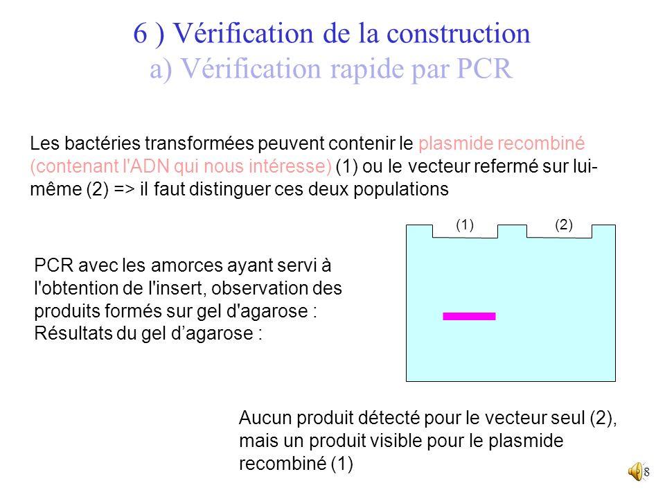 7 6 ) Vérification de la construction a) Vérification rapide par PCR Les bactéries transformées peuvent contenir le plasmide recombiné (contenant l'AD