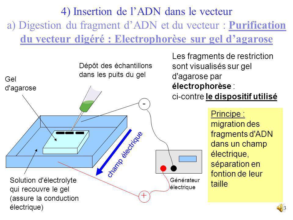12 4) Insertion de lADN dans le vecteur a) Digestion du fragment dADN et du vecteur : Purification du vecteur digéré Lélectrophorèse est une méthode d