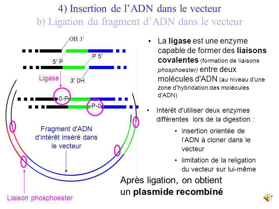 16 5' 3' 5' 3' Fragment dADN à cloner 5' 3' 5' 3' => Création d'extrémités collantes complémentaires. Insertion du fragment dADN dans le vecteur ouver