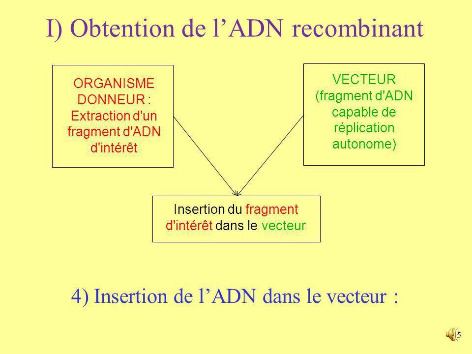 4 3) Présentation dun vecteur : Exemple du plasmide a) Vecteur Site de clonage multiple : nombreux sites de restriction (voir 4)) uniques permettant l