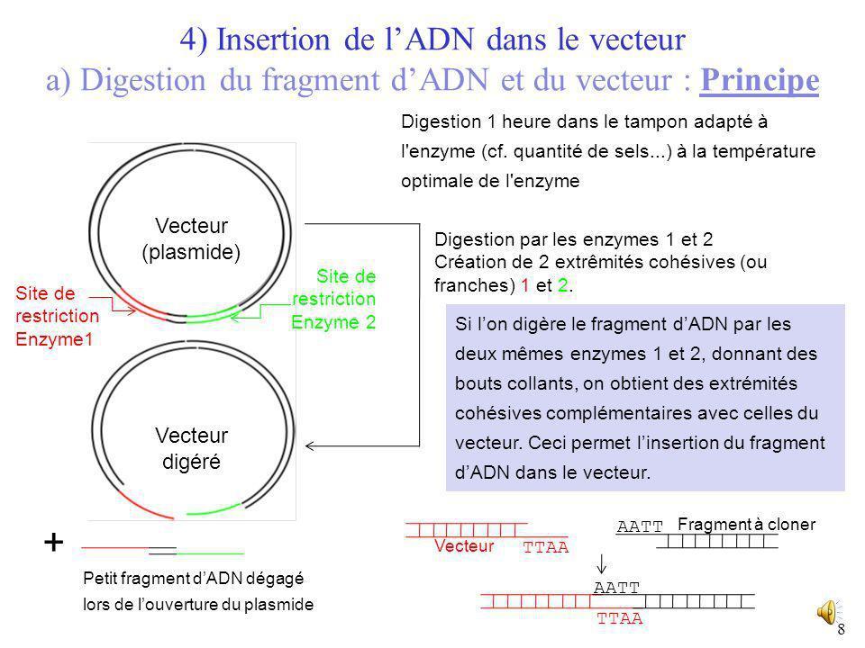 77 GAATTC CTTAAG Exemple : site de restriction de l'enzyme EcoRI (provenant de la bactérie Escherichia coli) 5' 3' 5' G AATTC CTTAA G 5' 3' 5' 3' Coup
