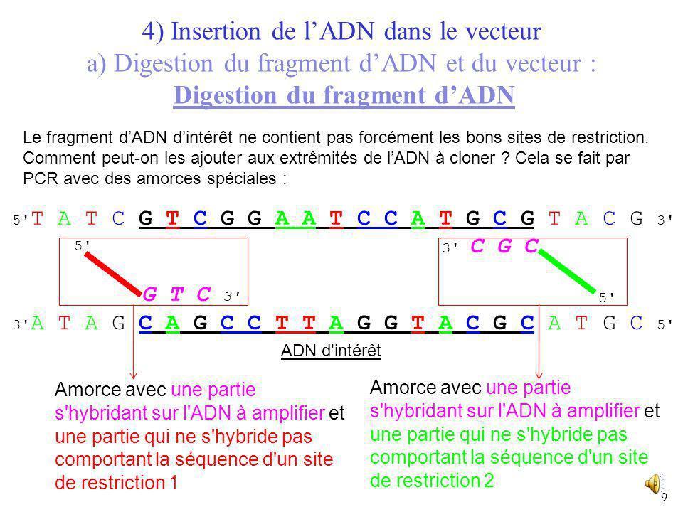 8 Vecteur (plasmide) Vecteur digéré + Petit fragment dADN dégagé lors de louverture du plasmide 4) Insertion de lADN dans le vecteur a) Digestion du f