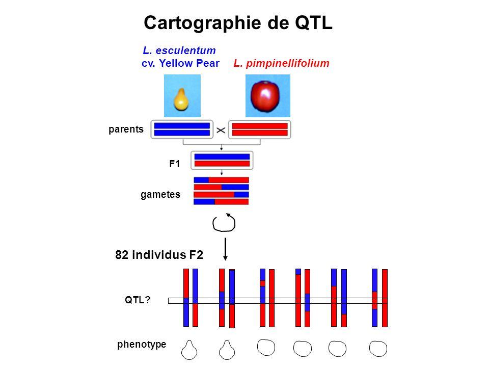 82 individus F2 parents F1 gametes QTL.phenotype L.