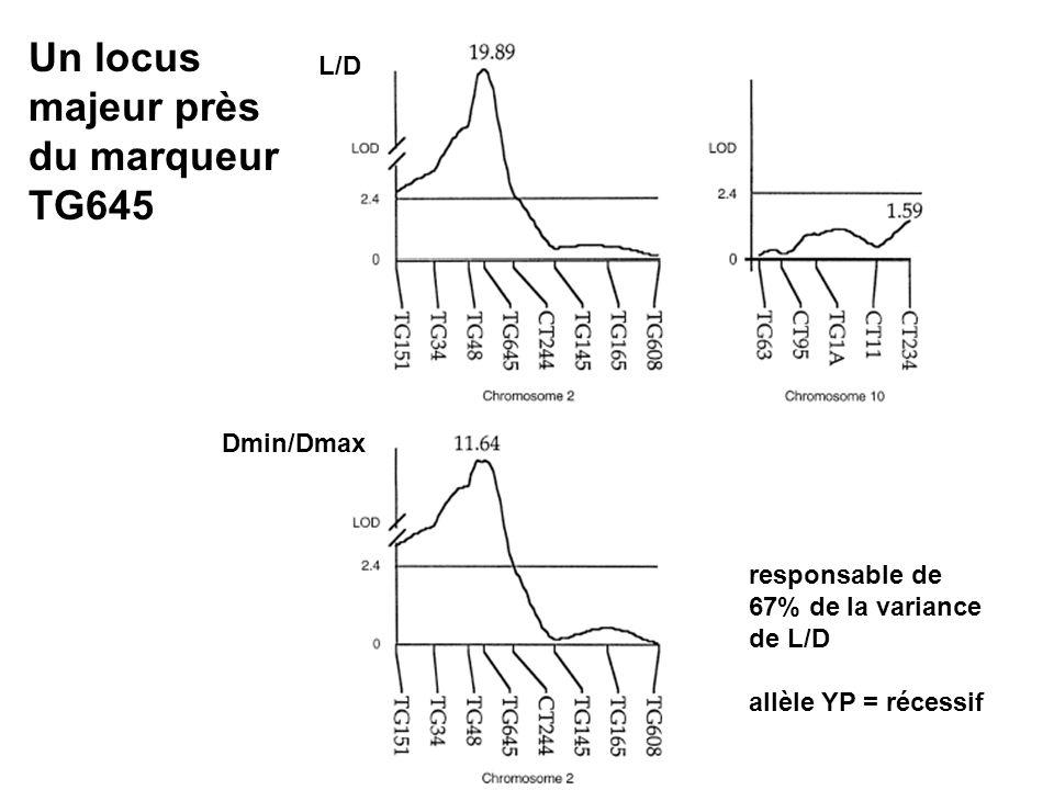 L/D Dmin/Dmax Un locus majeur près du marqueur TG645 responsable de 67% de la variance de L/D allèle YP = récessif