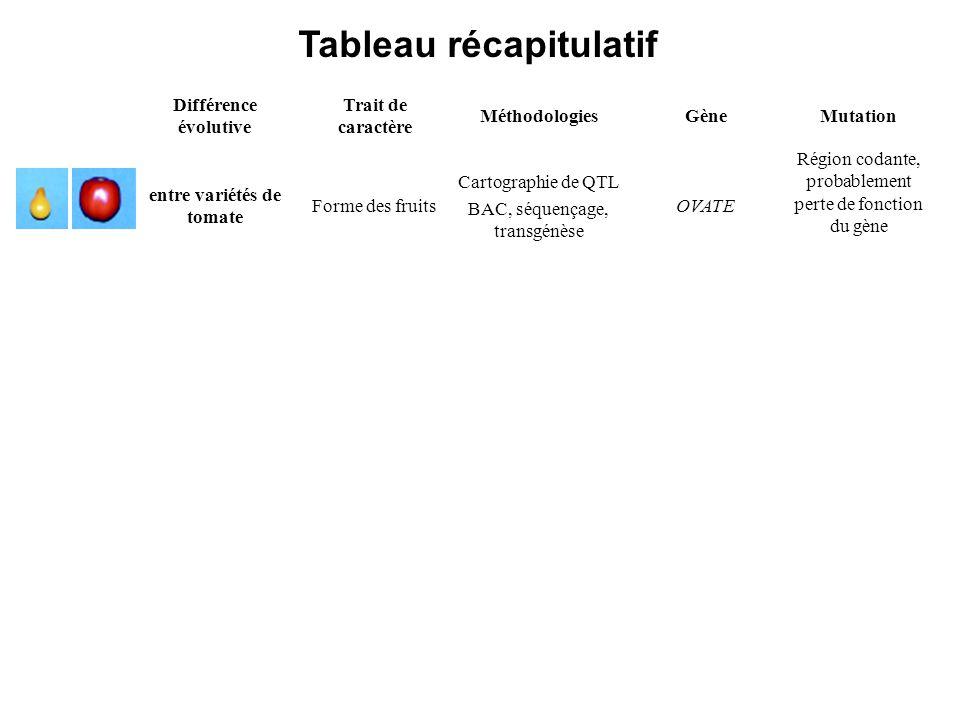Différence évolutive Trait de caractère MéthodologiesGèneMutation entre variétés de tomate Forme des fruits Cartographie de QTL BAC, séquençage, transgénèse OVATE Région codante, probablement perte de fonction du gène entre individus P.