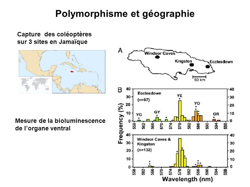 Polymorphisme et géographie Capture des coléoptères sur 3 sites en Jamaïque Mesure de la bioluminescence de lorgane ventral