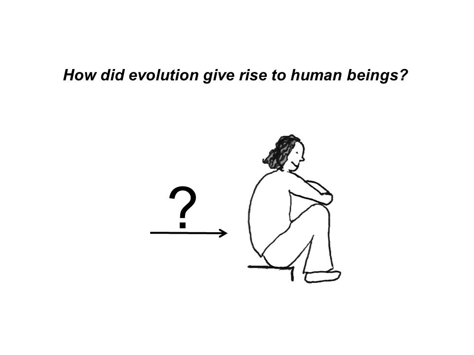 How did evolution give rise to human beings? ?