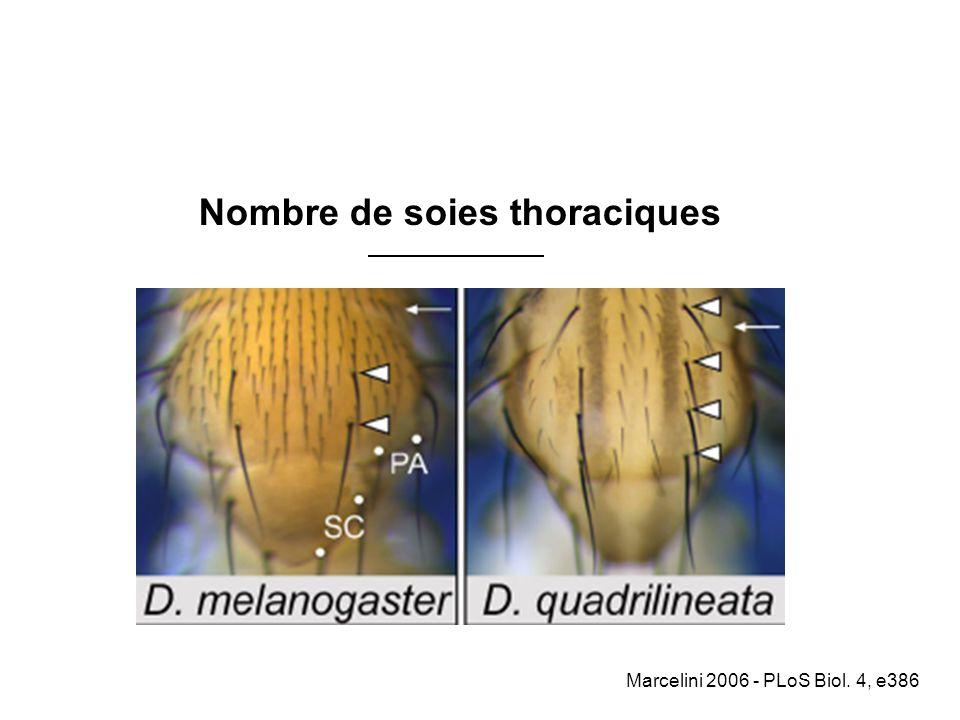 Nombre de soies thoraciques Marcelini 2006 - PLoS Biol. 4, e386