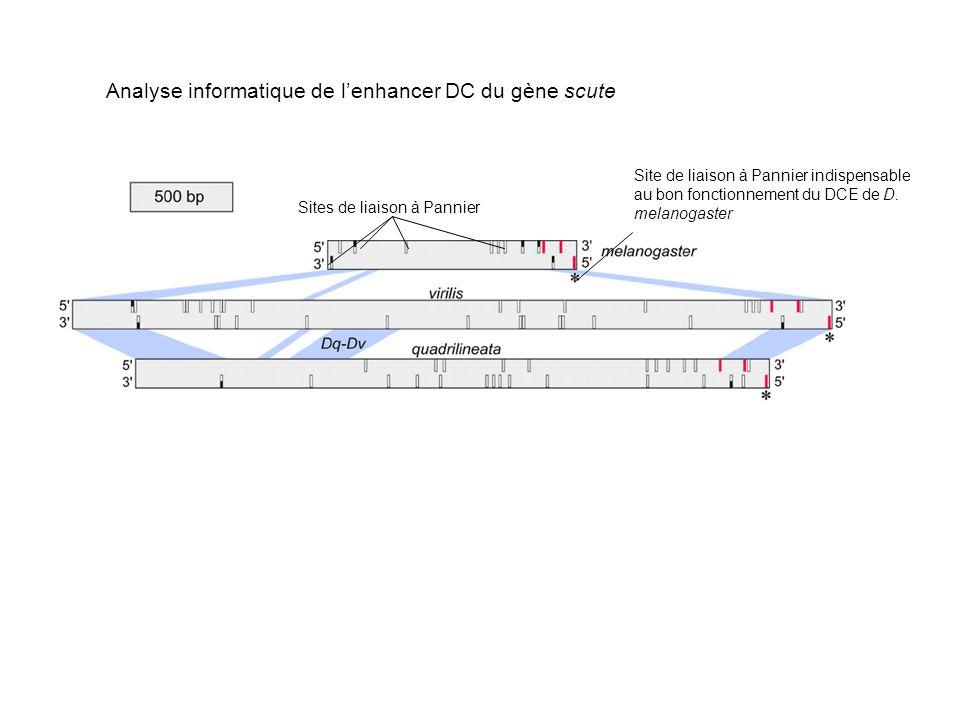 Sites de liaison à Pannier Site de liaison à Pannier indispensable au bon fonctionnement du DCE de D.