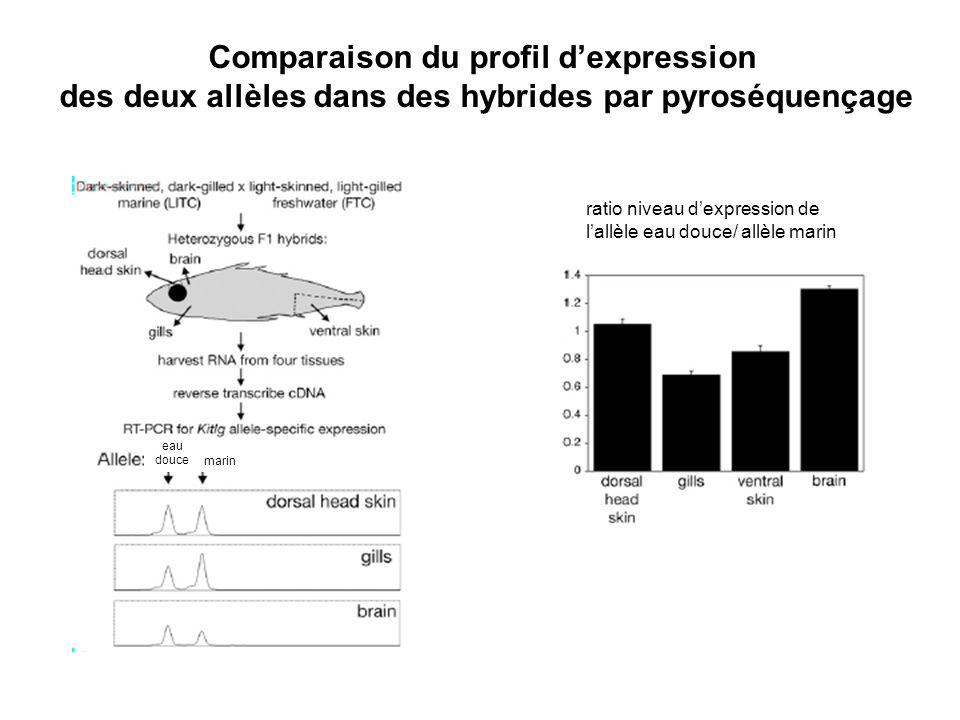 Comparaison du profil dexpression des deux allèles dans des hybrides par pyroséquençage ratio niveau dexpression de lallèle eau douce/ allèle marin eau douce marin