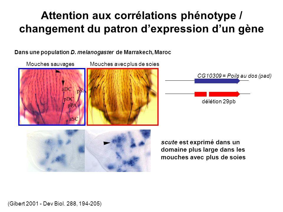 Attention aux corrélations phénotype / changement du patron dexpression dun gène Mouches sauvagesMouches avec plus de soies Dans une population D.