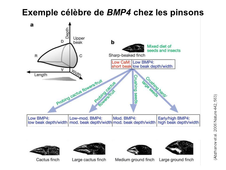 Exemple célèbre de BMP4 chez les pinsons (Abzhanov et al. 2006 Nature 442, 563)