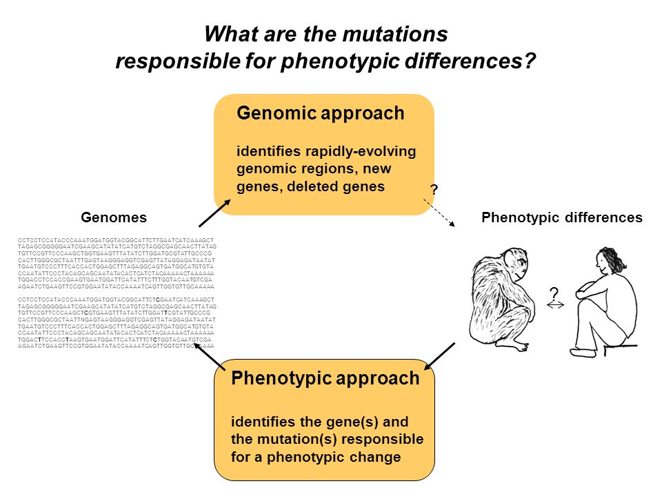 Diverses méthodologies Génétique Cartographie du chromosome impliqué (ex : autosomal versus sexuel) Cartographie de QTL et ses variantes Associations génétiques Test de complémentation Biologie générale Connaissance des gènes impliqués dans le processus biologique Congruence avec un phénotype mutant connu Corrélation avec le changement du patron dexpression dun gène Test définitif des différentes protéines in vitro dans E.
