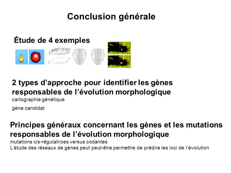Conclusion générale Étude de 4 exemples 2 types dapproche pour identifier les gènes responsables de lévolution morphologique cartographie génétique gène candidat Principes généraux concernant les gènes et les mutations responsables de lévolution morphologique mutations cis-régulatrices versus codantes Létude des réseaux de gènes peut peut-être permettre de prédire les loci de lévolution